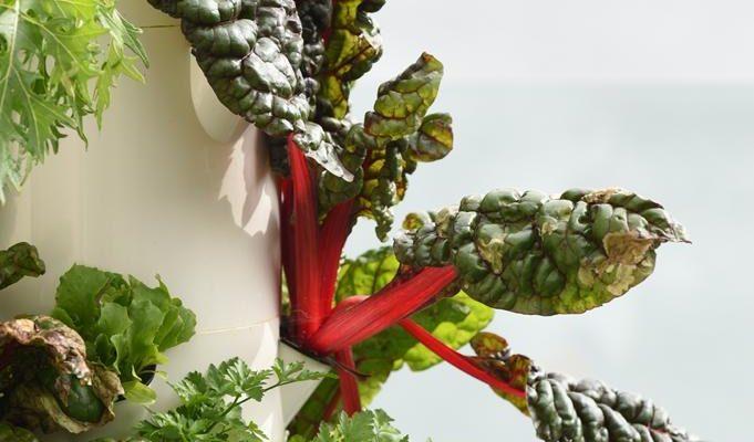 Top 10 Tower Garden Plants to Grow