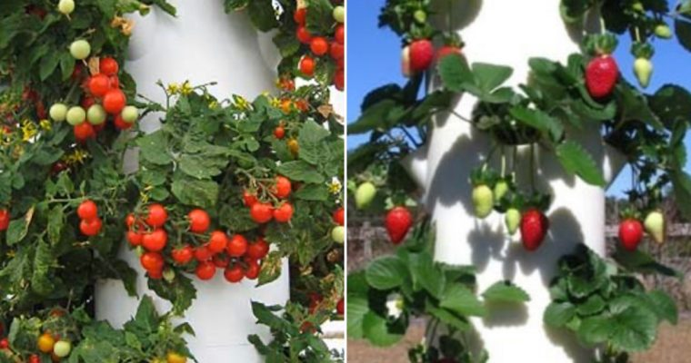 Top 10 Tower Garden Plants to Grow