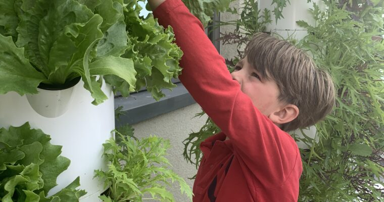 Growing Memories: 5 Ways to Involve Your Kids in Gardening